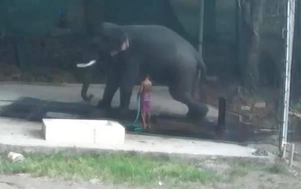 Ινδία: Ελέφαντας  σκότωσε τον εκπαιδευτή που | tovima.gr