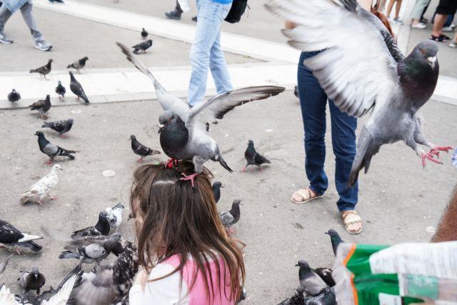 Θεσσαλονίκη: Πρόβλημα τα περιστέρια για το Airbnb | tovima.gr