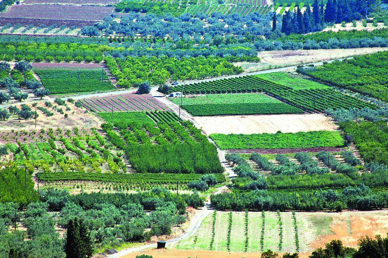 Ολιγοπωλιακές συνθήκες φρενάρουν την ανάπτυξη της ελληνικής γεωργίας | tovima.gr