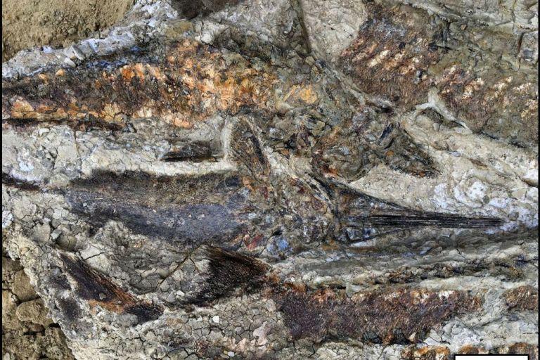 Στο φως απολιθώματα από τη μέρα της «Αποκάλυψης» πριν 66 εκατ. χρόνια | tovima.gr