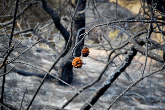 «Κρανίου τόπος» το δάσος της Στροφυλιάς λίγες μέρες μετά την πυρκαγιά | tovima.gr