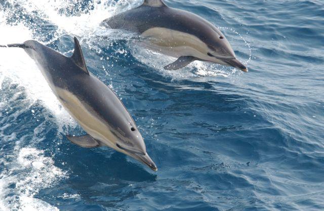 Νεκρά δελφίνια στο Αιγαίο μετά τις ασκήσεις του τουρκικού πολεμικού ναυτικού | tovima.gr