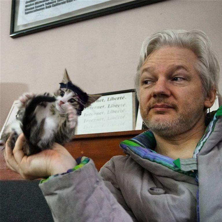 Τζούλιαν Ασάνζ: Πού βρίσκεται αγαπημένη του Embassy Cat | tovima.gr