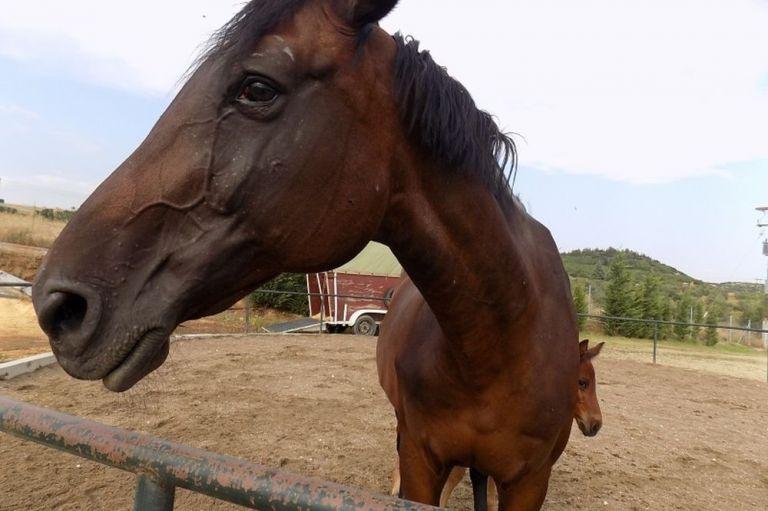 Γιάννενα: Ανθρώπινα κτήνη σκότωσαν εν ψυχρώ τρία άλογα   tovima.gr