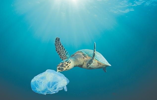 Το 50% των απορριμμάτων στις ελληνικές θάλασσες είναι κουτιά αλουμινίου, πλαστικά μπουκάλια και σακούλες | tovima.gr