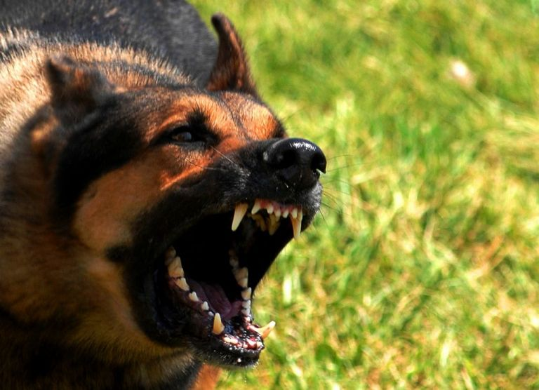 ΗΠΑ: Αγέλη σκύλων κατασπάραξε 14χρονο αγόρι που τα τάιζε | tovima.gr