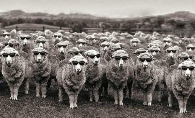 Οι ψηφοφόροι δεν είναι χαζοί, και σίγουρα δεν είναι πρόβατα | tovima.gr