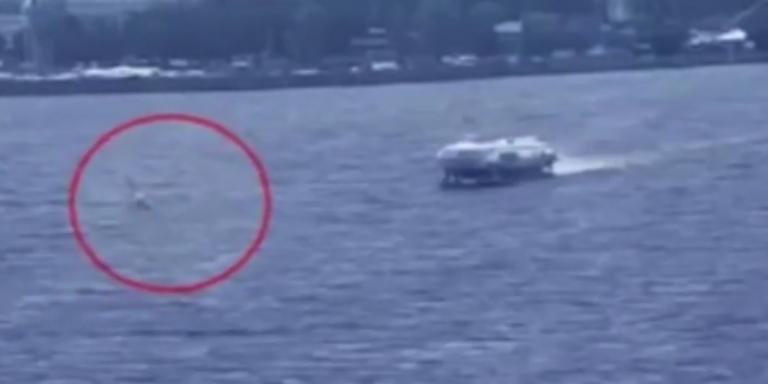 Η στιγμή που 18χρονος σέρφερ βρίσκει τραγικό θάνατο – Συγκρούστηκε με ιπτάμενο δελφίνι   tovima.gr