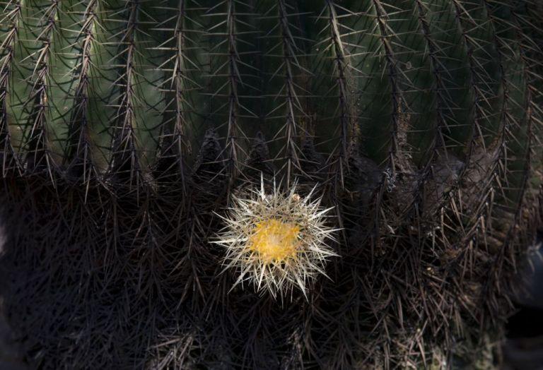 Σχεδόν 600 είδη φυτών έχουν εξαφανιστεί τα τελευταία 250 χρόνια | tovima.gr