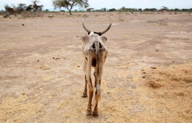 Παγκόσμια Ημέρα για την καταπολέμηση της απερήμωσης και της ξηρασίας | tovima.gr