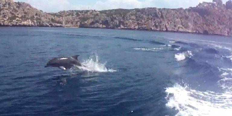 Πενήντα ρινοδέλφινα έκαναν θεαματική εμφάνιση στο Σχίνο Κορινθίας | tovima.gr
