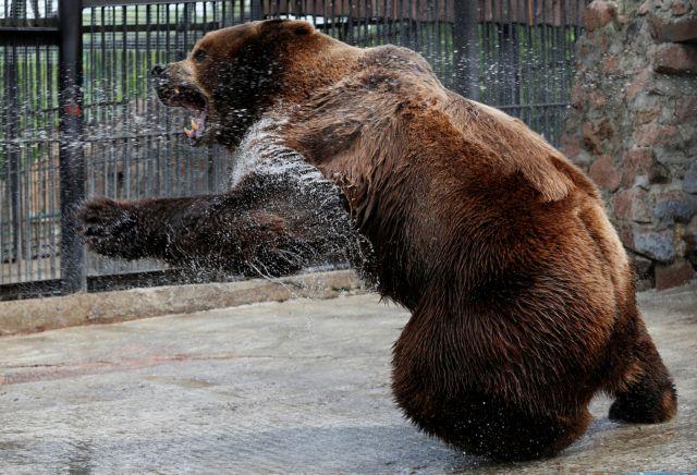 Αρκούδα κρατούσε άνδρα για 30 μέρες στη φωλιά της – Σοκαριστική η εικόνα του | tovima.gr