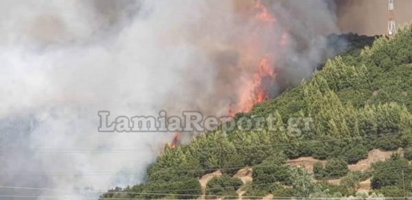 Φωτιά στη Φθιώτιδα : Καίει δασική έκταση στη Μακρακώμη – Ενίσχυση πυροσβεστικών δυνάμεων | tovima.gr