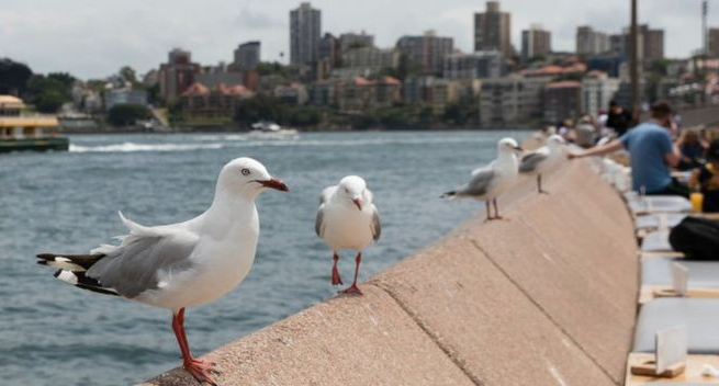 Γλάροι της Αυστραλίας μεταφέρουν βακτήρια ανθεκτικά στα γνωστά αντιβιοτικά | tovima.gr