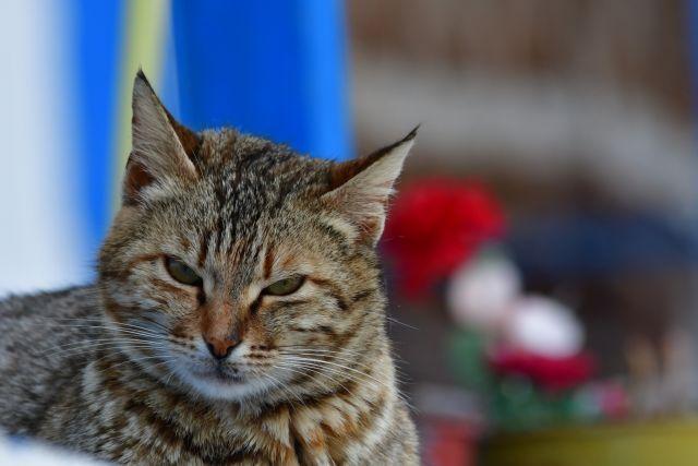 Ποινή φυλάκισης και βαρύ πρόστιμο σε Λυκειάρχη που πυροβόλησε αδέσποτη γάτα   tovima.gr