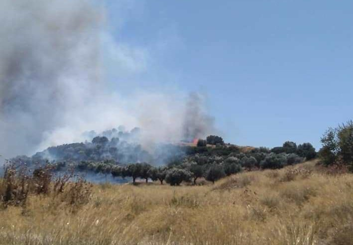 Μάχη με τις φλόγες : Δύσκολη η κατάσταση στο Μαρκόπουλο – Εκκένωση οικισμού στα Μέγαρα | tovima.gr