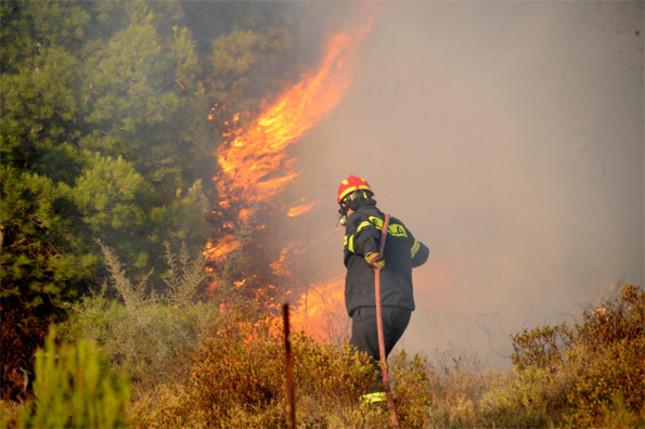 Συναγερμός στην Τανάγρα : Μεγάλη φωτιά σε δασική έκταση | tovima.gr