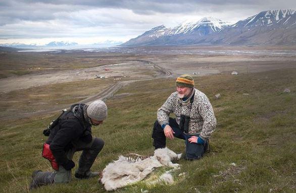 Αρκτική: 200 τάρανδοι νεκροί από την πείνα – Αποδίδεται στην κλιματική αλλαγή | tovima.gr