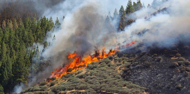 Γκραν Κανάρια: Στάχτη 15.000 στρέμματα γης – Συνεχίζεται η μάχη με τις φλόγες | tovima.gr
