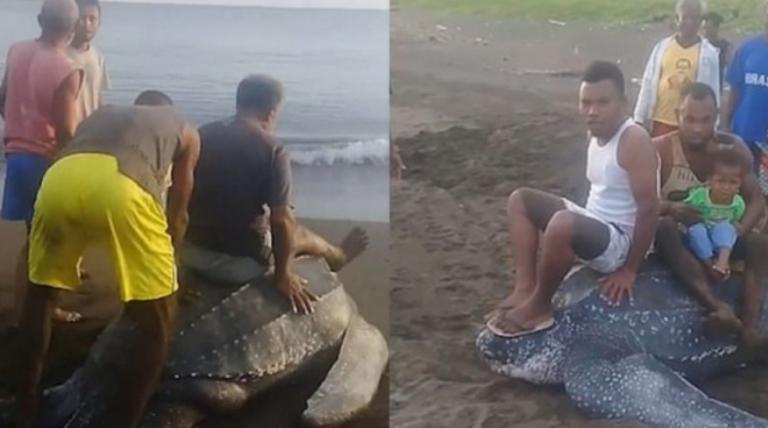 Θαλάσσια χελώνα βγήκε να γεννήσει και οι ντόπιοι άρχισαν να την καβαλούν | tovima.gr