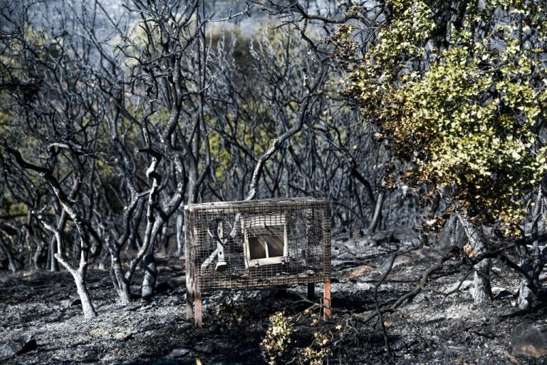 Παιανία: Εικόνες καταστροφής μετά την πυρκαγιά | tovima.gr