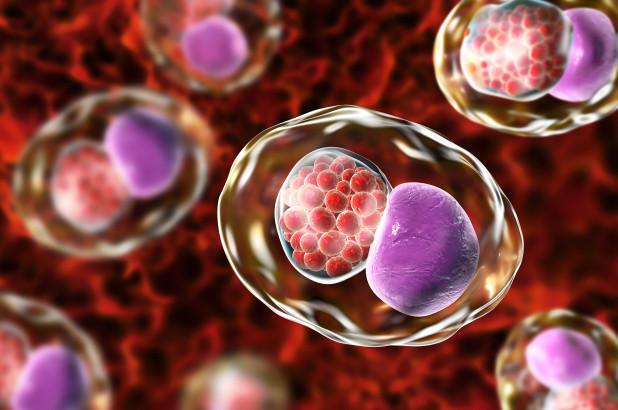 Ενθαρρυντικές ενδείξεις από την αρχική δοκιμή του πρώτου εμβολίου για τα χλαμύδια | tovima.gr