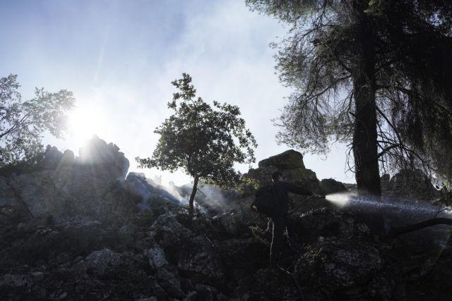 Εύβοια: Στάχτη 10.000 στρέμματα δάσους – Τεράστια οικολογική καταστροφή | tovima.gr