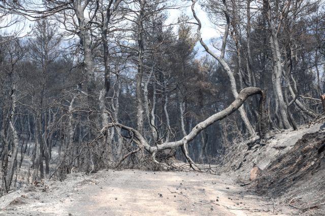 Εύβοια – πυρκαγιά: Τρεις υπόπτους «βλέπουν» οι Αρχές – Ολα δείχνουν εμπρησμό   tovima.gr
