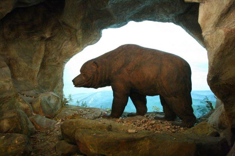 Αρκούδες σπηλαίων εναντίον ανθρώπων σημειώσατε 2 | tovima.gr