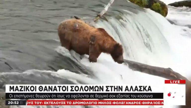 Κλιματική Αλλαγή: Μαζικοί θάνατοι σολομών στην Aλάσκα | tovima.gr