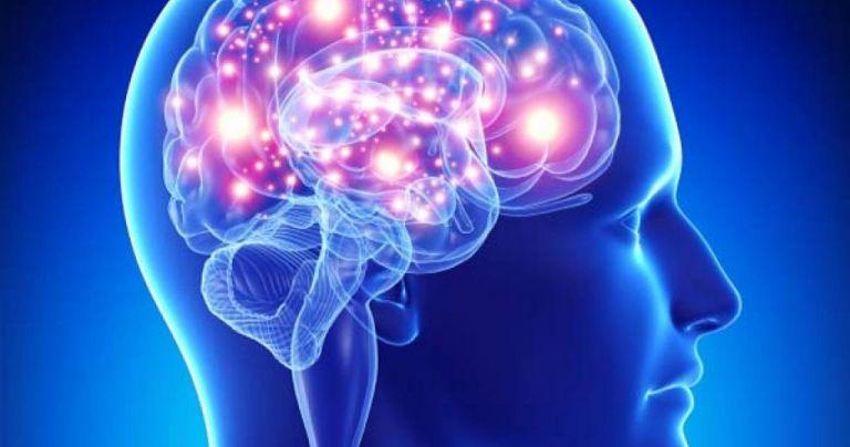 Έλληνες επιστήμονες ανατρέπουν την υπάρχουσα θεωρία για τα εγκεφαλικά κύτταρα | tovima.gr