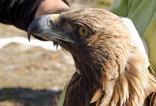 Καλώς ήρθατε στη Θράκη, τη γη των αρπακτικών πουλιών   tovima.gr