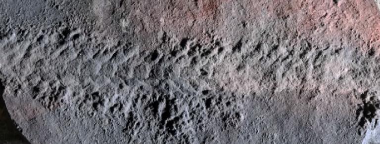 Ανακαλύφθηκε απολίθωμα εντόμου-Σερνόταν πριν από 550 εκατ. χρόνια | tovima.gr