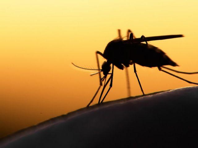 Θερίζει ο ιός Δυτικού Νείλου: Δύο νεκροί την τελευταία εβδομάδα | tovima.gr