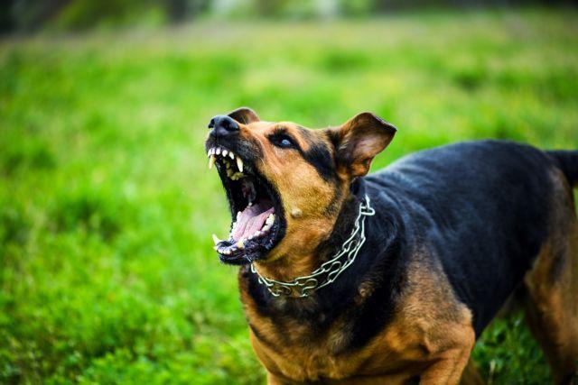 Ηράκλειο: Στο νοσοκοκομείο 11χρονα δίδυμα μετά από δάγκωμα σκύλου   tovima.gr