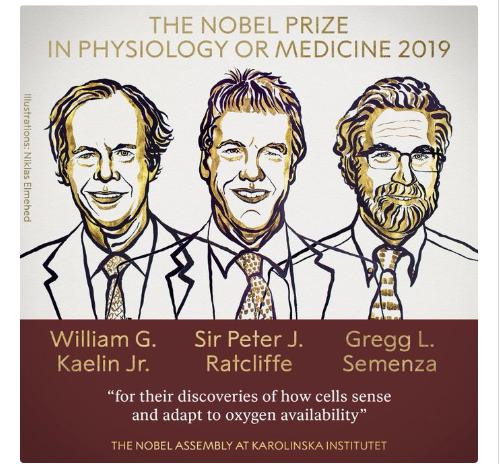 Σε τρεις ερευνητές το Νόμπελ Ιατρικής 2019 | tovima.gr