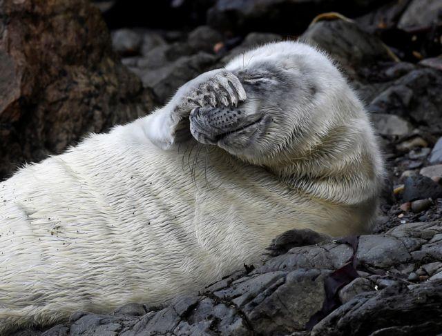 640.000 τόνοι εξαρτημάτων αλιείας στις θάλασσες ετησίως – Θα αποσυντεθούν σε 600 χρόνια! | tovima.gr