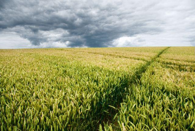 Κλιματική αλλαγή: Πώς επιδρά στις καλλιέργειες   tovima.gr