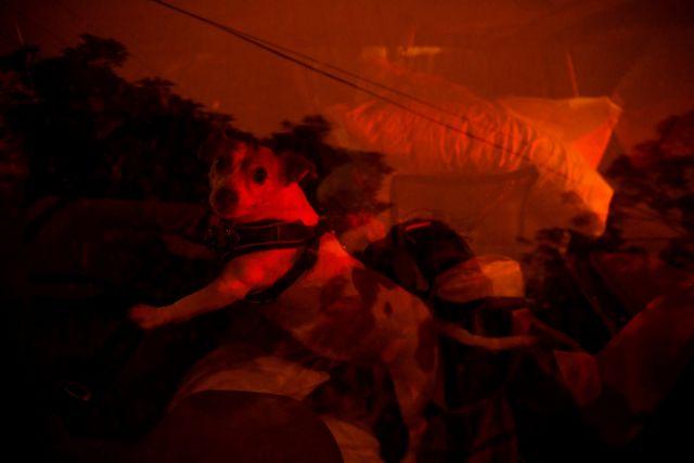 Δίχως τέλος η καταστροφή από τις πυρκαγιές στην Αυστραλία   tovima.gr