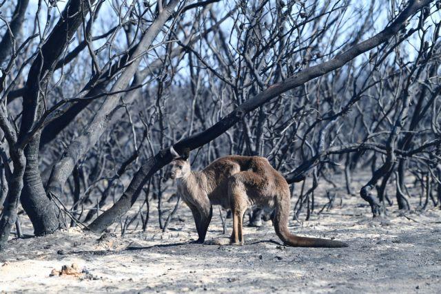 Αυστραλία: Δεκάδες φωτιές εκτός ελέγχου – Νεκροί, καμένα σπίτια, απανθρακωμένα ζώα | tovima.gr