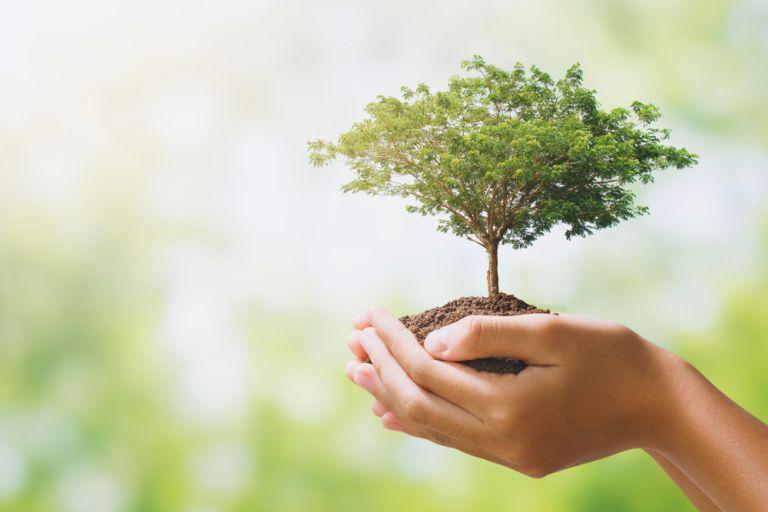 Επιχειρηματικότητα με σεβασμό προς το περιβάλλον   tovima.gr