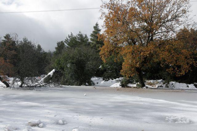 Καιρός:  Στα «λευκά» η Πάρνηθα εξαιτίας του βοριά | tovima.gr