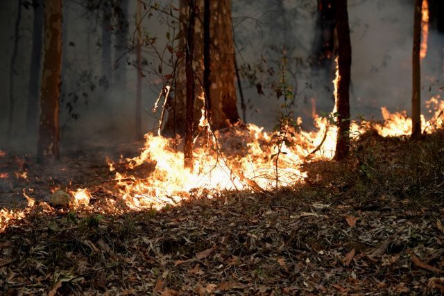 Ο εορτασμός της ημέρας της Αυστραλίας επισκιάστηκε από την τραγωδία των πυρκαγιών | tovima.gr