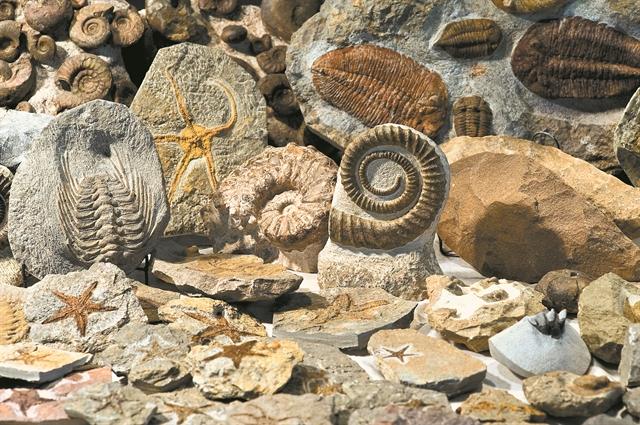 Ζουμ στην εξαφάνιση των ειδών | tovima.gr