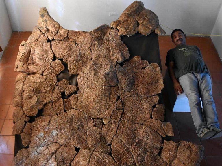 Νότια Αμερική: Ανακαλύφθηκαν απολιθώματα γιγάντιας χελώνας | tovima.gr