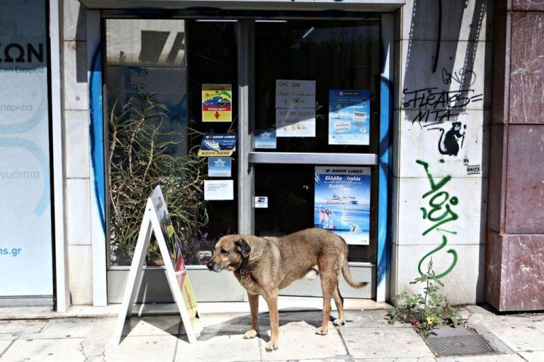 Συστάσεις για τα αδέσποτα εν μέσω κορωνοϊού | tovima.gr