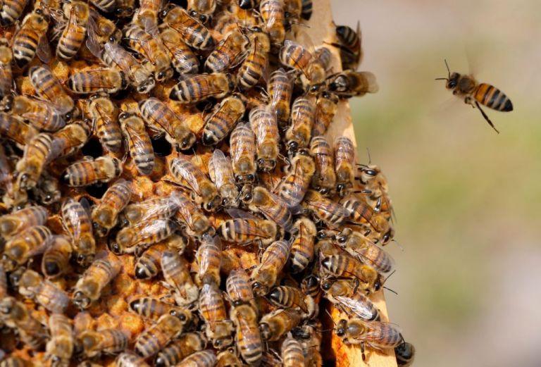 Τα lockdown περιορίζουν την κίνηση των μελισσών – Κίνδυνος για την παγκόσμια αγροτική παραγωγή | tovima.gr