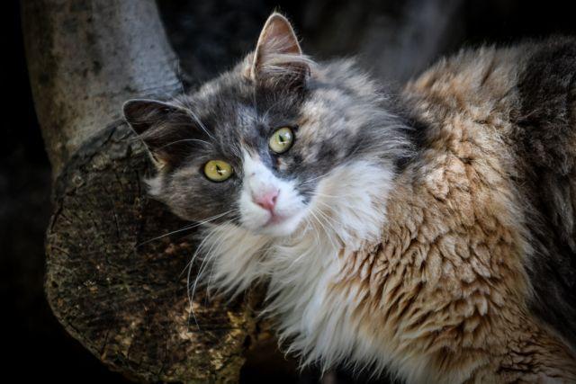 Γάτος βρέθηκε θετικός στον κοροναϊό στη Γαλλία   tovima.gr