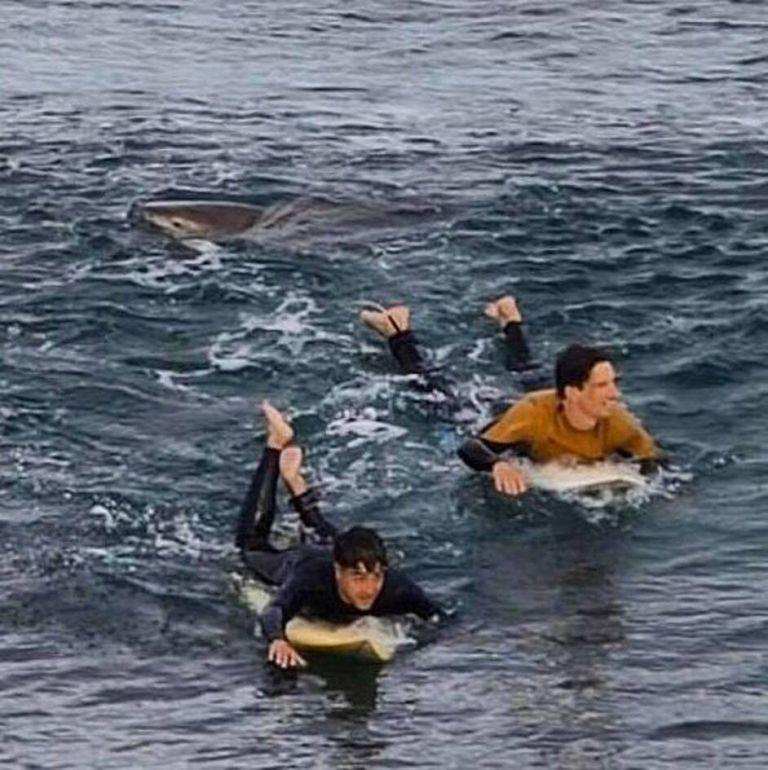 Οταν σέρφερ έρχεται αντιμέτωπος με καρχαρία | tovima.gr
