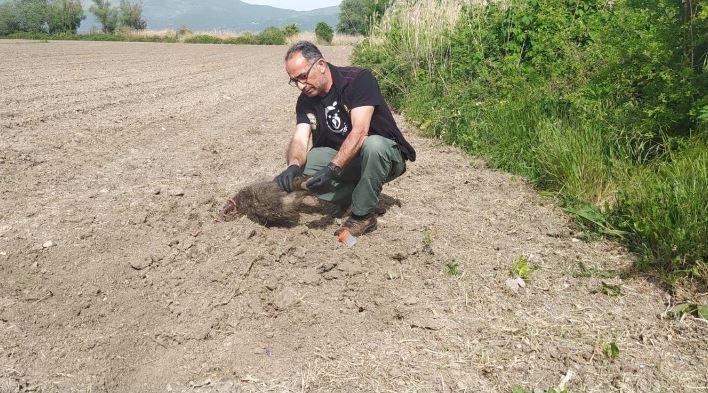 Καστοριά: Αρκούδα έθαψε σε αγρόκτημα τα μικρά της μετά από δυστύχημα | tovima.gr